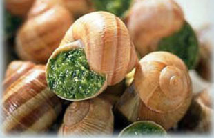 Escargots team building paris insolite